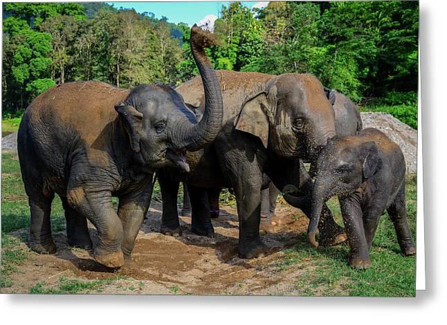 Elephant Cool Down Greeting Card