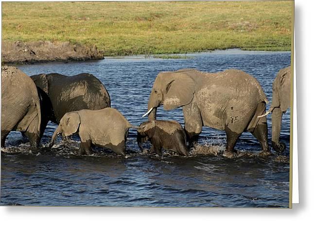 Elephant Crossing Greeting Card