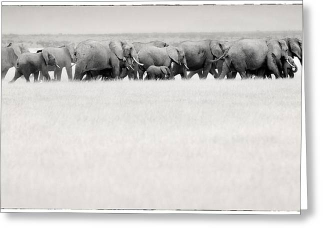 Elephant Herd East Africa Greeting Card by Jack Daulton