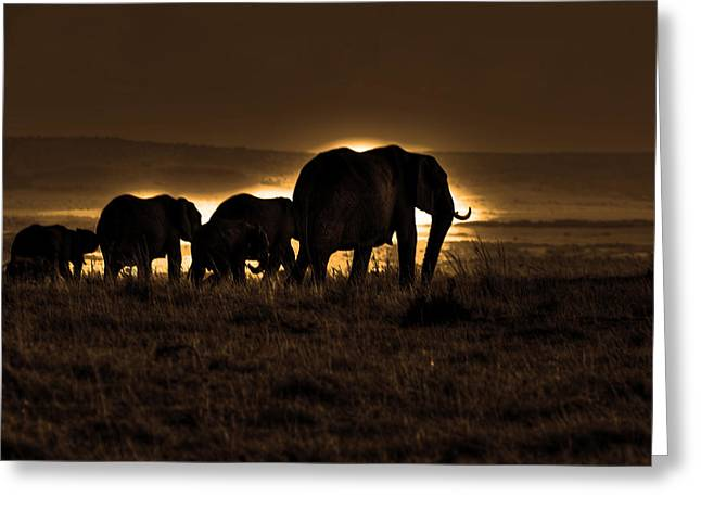 Elephant Herd On The Masai Mara Greeting Card by Aidan Moran