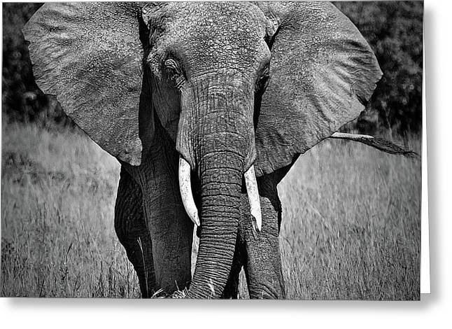 Greeting Card featuring the photograph Elephant In Amboseli by Antonio Jorge Nunes