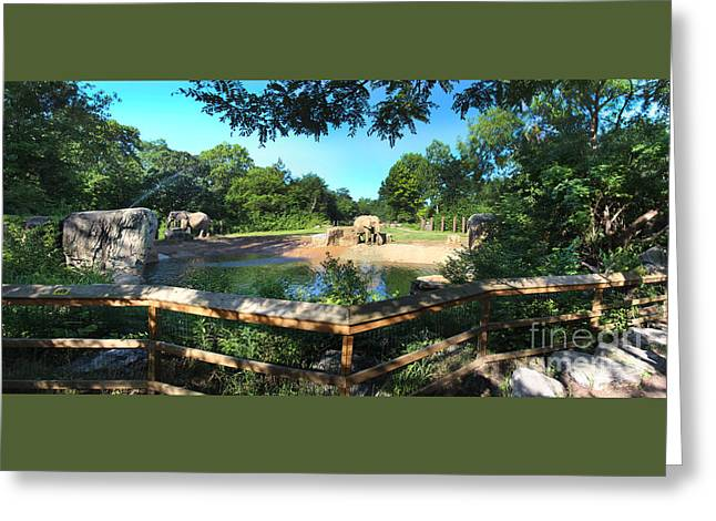 Elephant Pano - Kc Zoo Greeting Card by Gary Gingrich Galleries