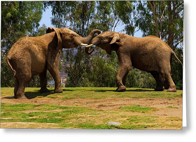 Elephant Play 3 Greeting Card