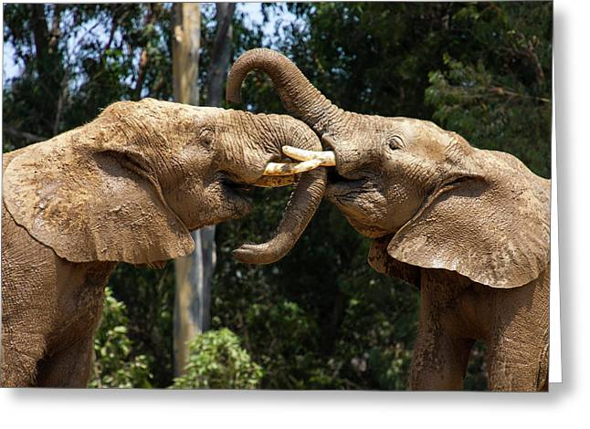 Elephant Play Greeting Card