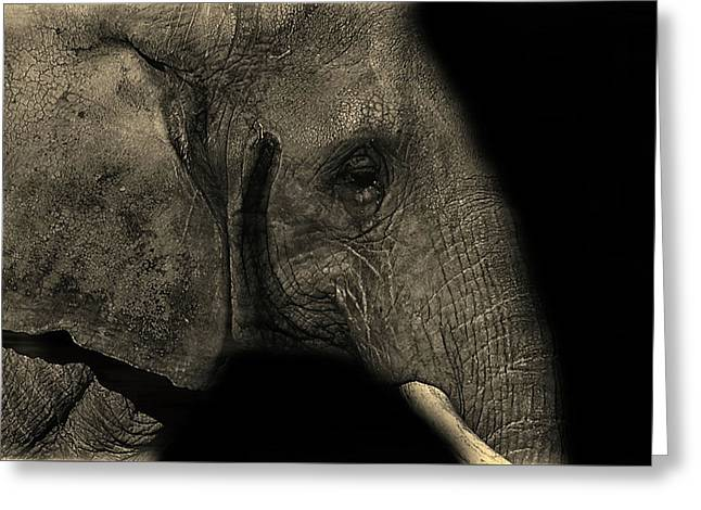 Elephant Portrait Greeting Card by Martin Newman