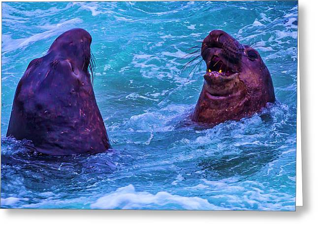 Elephant Seals Fighting In Ocean Surf Greeting Card by Garry Gay