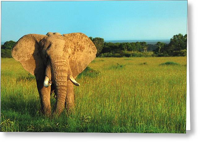 Elephant Greeting Card by Sebastian Musial