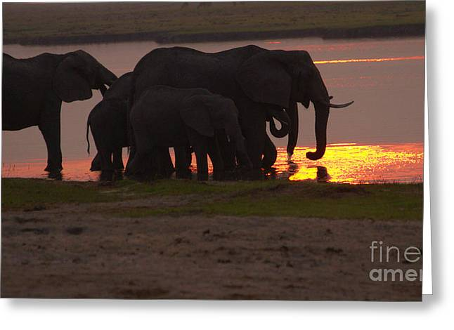 Elephant Sunset Greeting Card