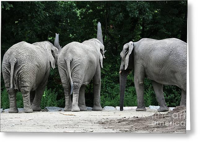 Elephant Trio Greeting Card by Karol Livote