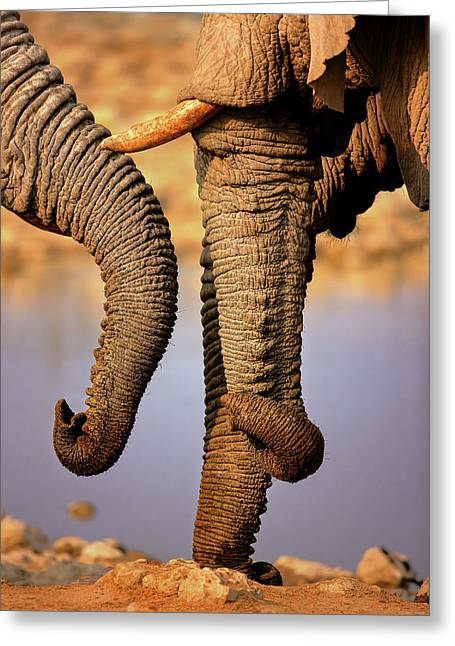 Elephant Trunks Interacting Close-up Greeting Card