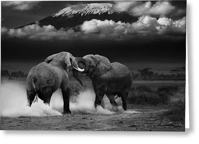 Elephant Tussle Greeting Card