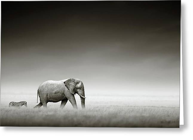 Elephant With Zebra Greeting Card