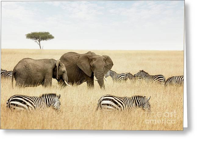 Elephants And Zebras In The Masai Mara Greeting Card
