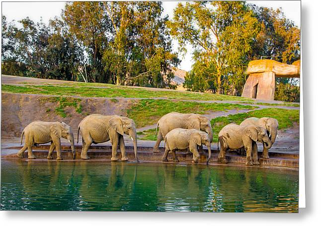 Elephants Are Family Greeting Card by April Reppucci