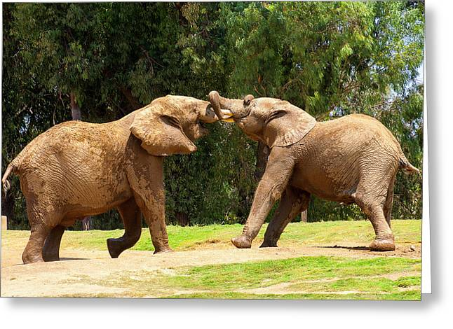 Elephants At Play 2 Greeting Card