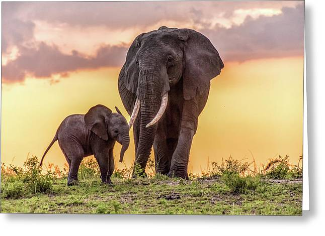 Elephants At Sunset Greeting Card by Janis Knight
