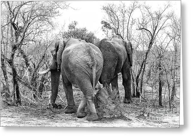 Elephants Black And White Greeting Card by Jane Rix