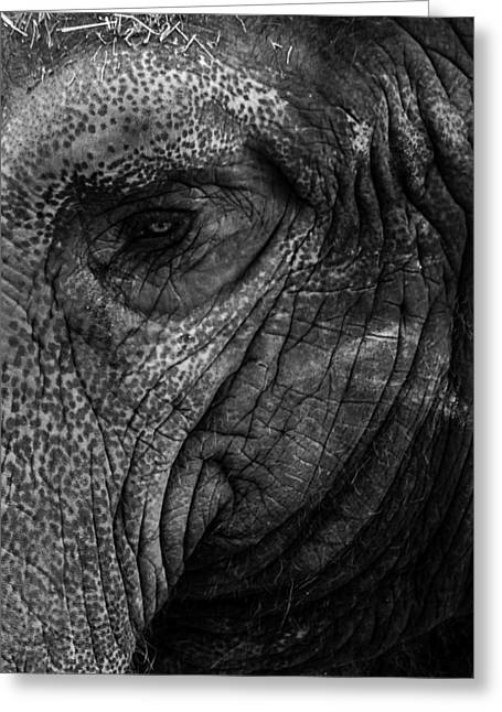 Elephants Eye Greeting Card