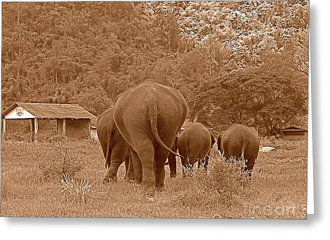 Greeting Card featuring the photograph Elephants II by Louise Fahy