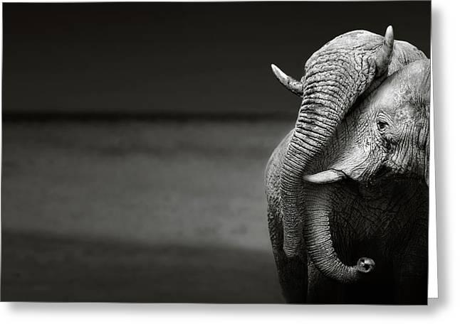 Elephants Interacting Greeting Card