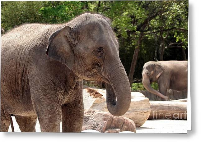 Elephants Greeting Card by Jeannie Burleson