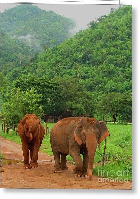 Greeting Card featuring the photograph Elephants by Louise Fahy