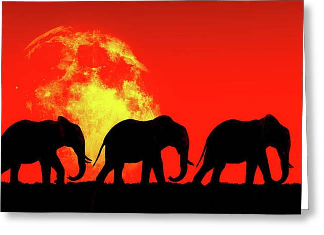 Elephants Walk In The Red Sky Greeting Card