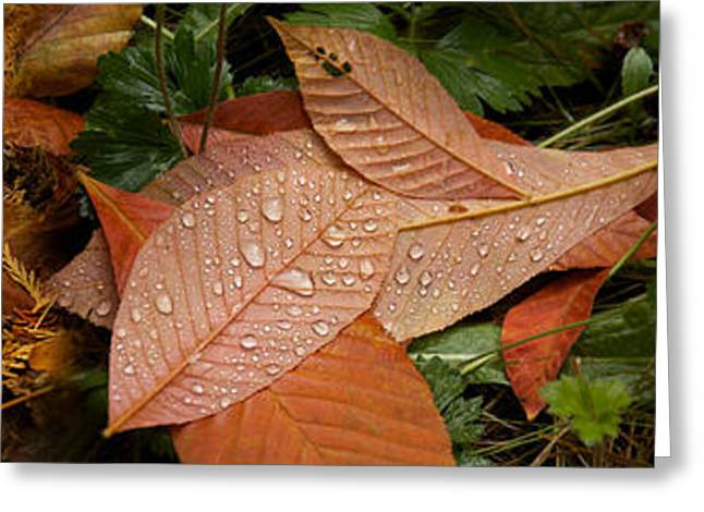 Elevated View Of Raindrops On Leaves Greeting Card