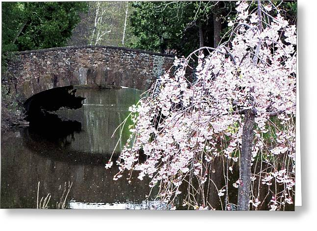 Elizabeth Bridge And Cherry Blossoms Greeting Card by Leonard Rosenfield