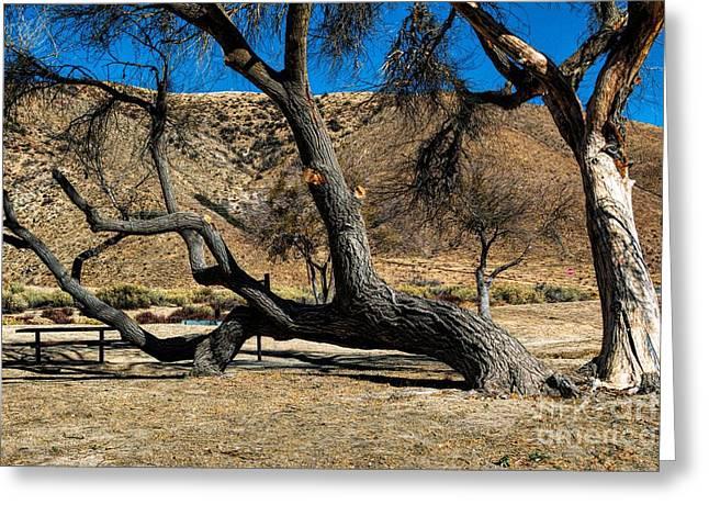 Elizabeth Lake Tree Greeting Card