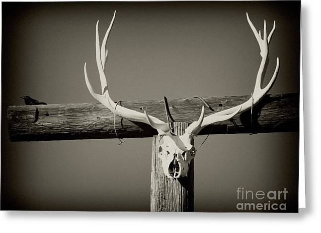 Elk And Blackbird Ranch Gate Greeting Card by Gus McCrea
