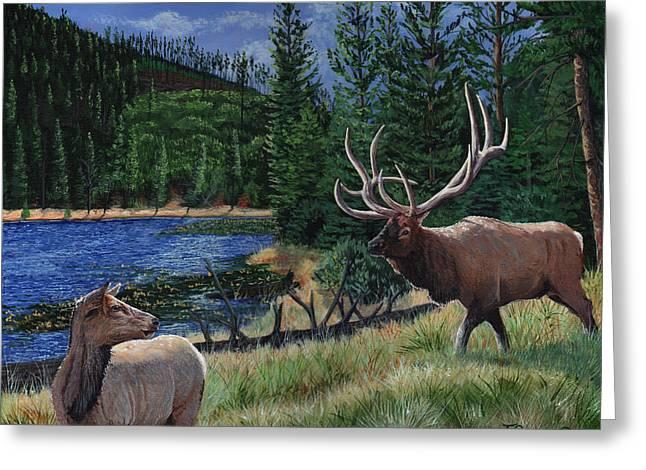 Elk At Beaver Lake  Yellowstone Greeting Card