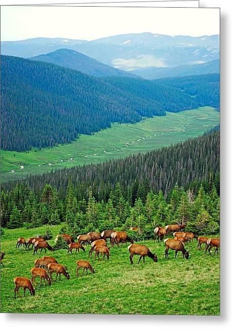 Elk Highlands Greeting Card