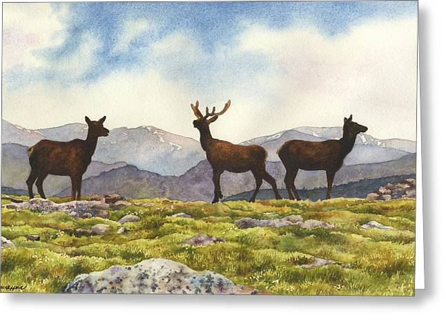 Elk In The Evening Greeting Card