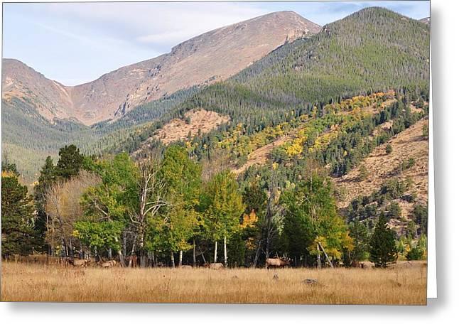 Elk In The Rockies Greeting Card by Jeff Moose
