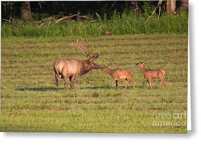 Elk Kisses Greeting Card by Jemmy Archer