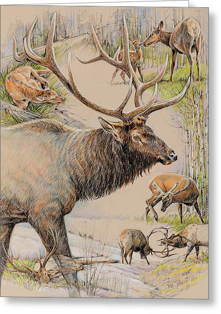 Elk Lifescape Greeting Card