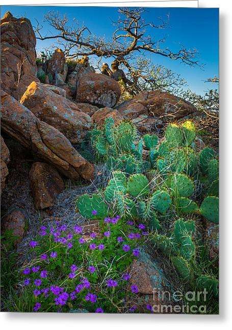 Elk Mountain Flowers Greeting Card by Inge Johnsson