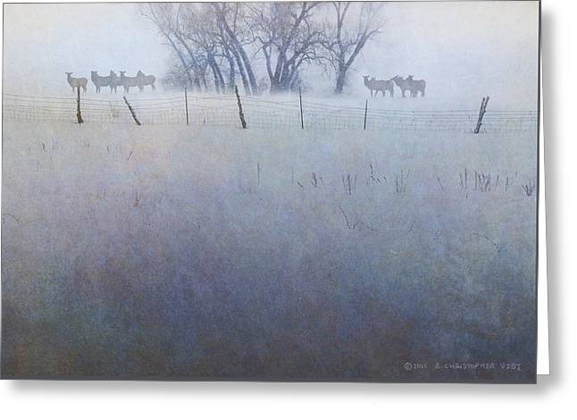 Elk On The Hill Greeting Card by R christopher Vest