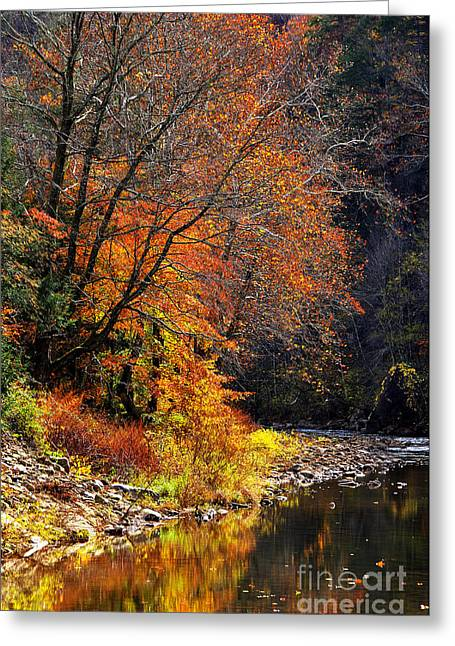 Elk River Autumn Greeting Card by Thomas R Fletcher