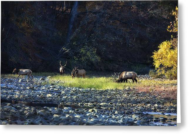 Greeting Card featuring the photograph Elk River Crossing At Sunrise by Michael Dougherty
