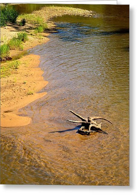 Elk River Driftwood Greeting Card