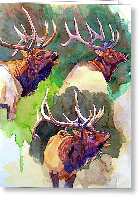 Elk Studies Greeting Card
