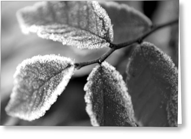 Elm Leaves In Frost  Greeting Card by Michelle  BarlondSmith