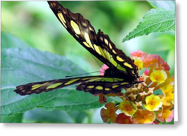 Elusive Butterfly Greeting Card