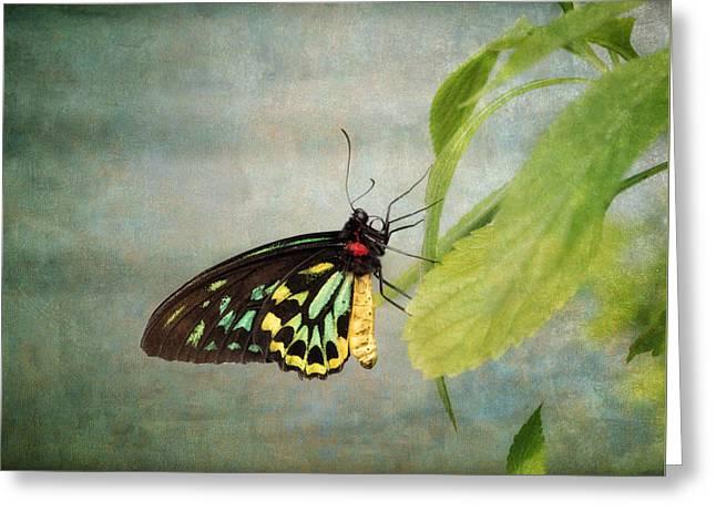 Emerald Beauty Greeting Card by Kim Hojnacki