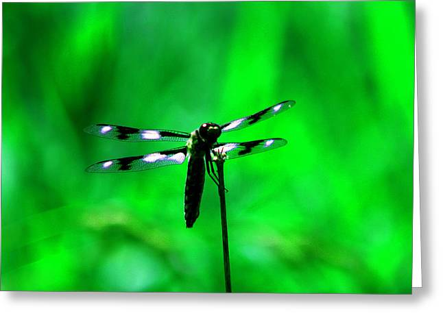 Emerald Dragon Fly Greeting Card by Nick Gustafson