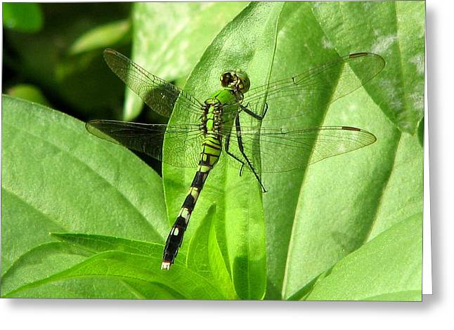Greeting Card featuring the photograph Emerald Dragonfly by David Dunham