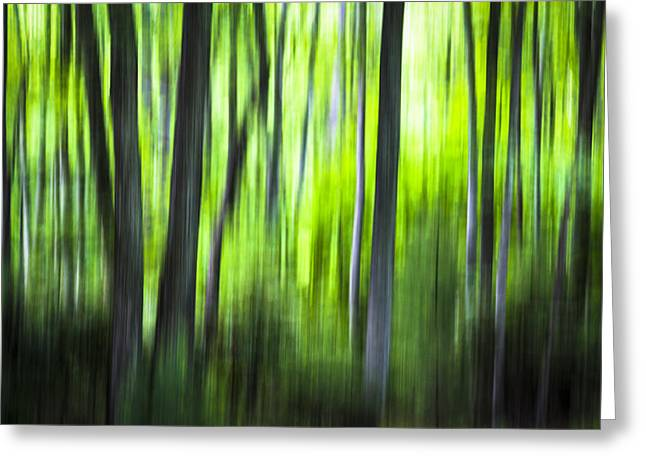 Green Forest - North Carolina Greeting Card
