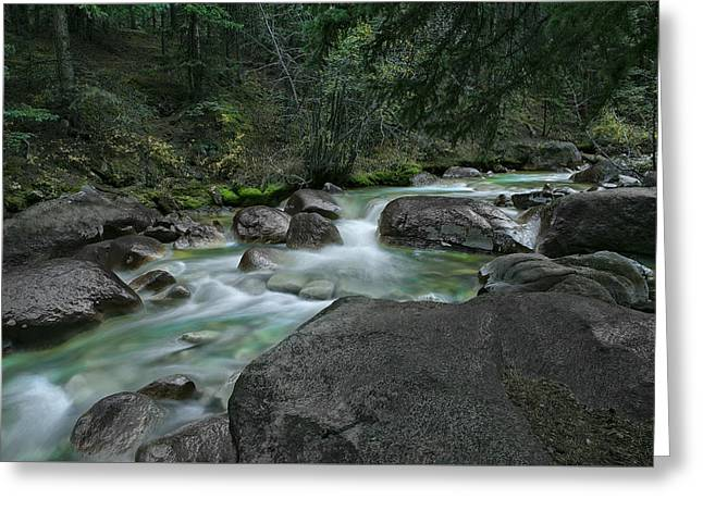 Greeting Card featuring the photograph Emerald Forest by Tim Reaves